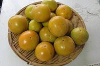 柿を頂いて - 光さんの日常