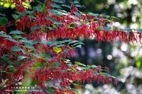 向島百花園で高い所で咲いていた花!(^^)! - 自然のキャンバス
