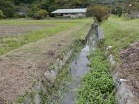 塩害でしょうか? - 千葉県いすみ環境と文化のさとセンター