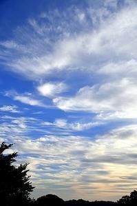 秋の空と朝顔とコロ姫 - 写心食堂