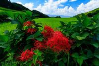 明日香村の彼岸花・細川の集落(前編) - 花景色-K.W.C. PhotoBlog