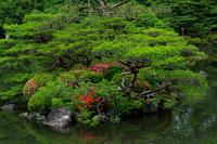 初夏の花咲く平安神宮 - 花景色-K.W.C. PhotoBlog