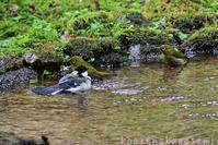 水場の小鳥 - 気ままな生き物撮り