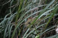 ■コガタスズメバチ18.10.4 - 舞岡公園の自然2