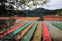 あおさ海苔の養殖 - みちはた写真館フォトギャラリー