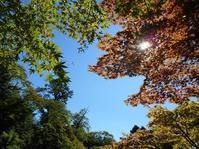 2018年10月の藤田記念庭園茶会開催のお知らせ - Tea Wave  ~幸せの波動を感じて~