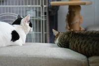 ふたり - Black Cat Moan