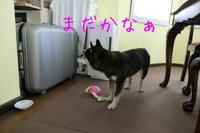 誘うジェンちゃん - HAMAsumi-Life