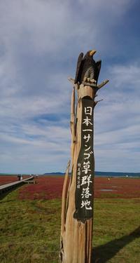 日本一のサンゴ草。 - 大地の四季