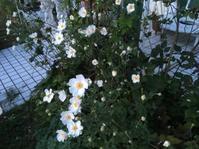 白馬登山キャンセルして - 花の自由旋律