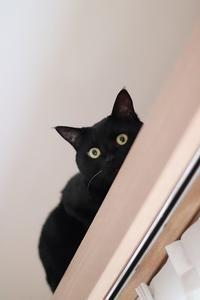 猫ちぐら移動しました - きょうだい猫と仲良し暮らし