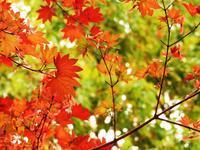 今週末の天気と気温(2018年10月5日):カンフェスまであと1日!! - 北軽井沢スウィートグラス