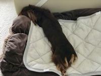 18年10月5日 こんな日は、よく寝れるね^_^ - 旅行犬 さくら 桃子 あんず 日記