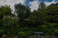 秋の詩仙堂②~庭に咲く秋の花々 - 鏡花水月