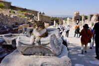 エフェソス遺跡に暮らすニャンコ - hanako photograph