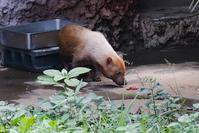 熱帯雨林つながり - 動物園に嵌り中