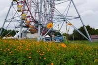 キバナコスモス~観覧車と♪葛西臨海公園2 - Let's Enjoy Everyday!