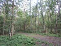 森の中の占い屋さん☆☆☆ - 占い師 鈴木あろはのブログ