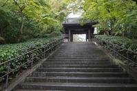 秋の北鎌倉散歩円覚寺と亀ヶ谷坂切通しの萩 - エーデルワイスPhoto