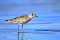 寂しそうpart2 - 綺麗な野鳥たち