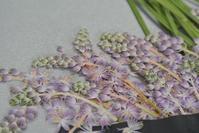 金曜日、土曜日の押し花教室 - アトリエ・アキ