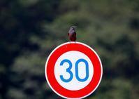最高速度は30km? - なんでもブログ