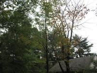 降ったり止んだり10月6日(土) - 雲居