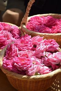 10月2日「バラ摘みと蒸留・ローズウォーター作り」バスツアーがありました。 -  日本ローズライフコーディネーター協会