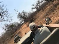 南アフリカ旅行⑦-クルーガー国立公園サファリー - Back to the Journey