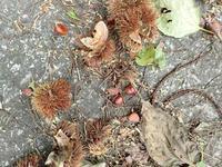栗きんとん - 飛騨山脈の自然
