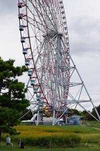 キバナコスモス~観覧車と♪葛西臨海公園3 - Let's Enjoy Everyday!