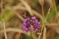 秋の野の花 - 森と水の記憶