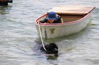 水難救助犬、琵琶湖大会へ! - ニューファンドランド RIKIがゆく