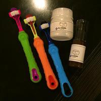 歯磨習慣 - ニューファンドランド RIKIがゆく