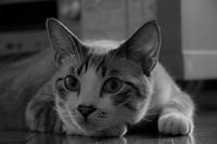 アイドル写真 - ぎんネコ☆はうす