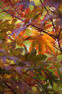 Autumn Colours - ∞ infinity ∞