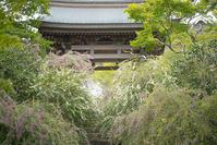 鎌倉・海蔵寺の萩 - エーデルワイスPhoto