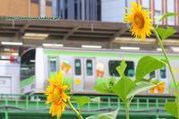 08/13 リラックマ捕獲作戦リターンズ「前編」~その2~ - 本日の夢旅人