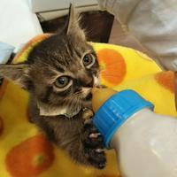 個性が出てきた子猫達 と、ジュンめも - ゆきももこの猫夢日記