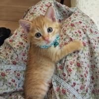 【がぶがぶタマちー】【桜丸トライアル延長】 - ゆきももこの猫夢日記