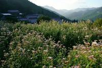 嵯峨水尾フジバカマ鑑賞会 - Deep Season