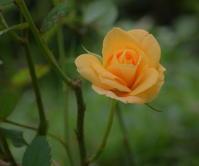 今日は庭の花 - 風の吹くまま
