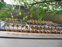 干し柿作り - *クリブン日記*