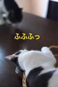 にゃんこ劇場「にゅろにゅろ攻撃」 - ゆきなそう  猫とガーデニングの日記