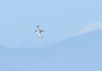 Blue Sky!! - Love birds !