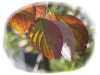初秋の庭 - ひとりあそび