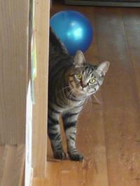 猫のお留守番 星尾くん編。 - ゆきねこ猫家族