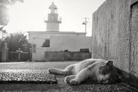 猫と灯台 - 夢幻泡影