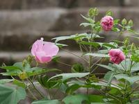 青葉ヶ池の畔の花花 - 花と葉っぱ