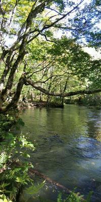 感動の奥入瀬渓流 - 藍。の着物であるこう
